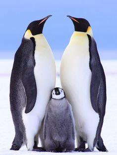 Penguin family in Antarctica.