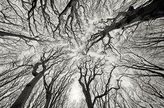 Fractal Trees #tree