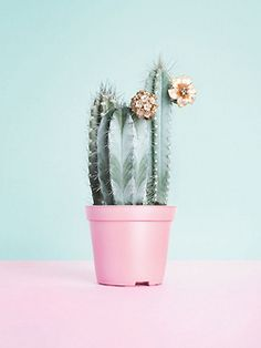 cactus with flowers and a pastel pot