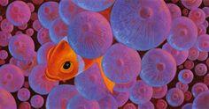 http://www.pixar-planet.fr/films/images/lemondedenemo/artwork-monde-nemo-14.jpg