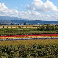 ファーム富田 #FarmTomita #nakafurano Hokkaido