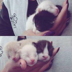 """(@limao_hope) no Instagram: """"Mais uma ninhada do Diário !! #vieram7 😍😍😍"""" #kitty #cute #gatos #filhotes #baby"""