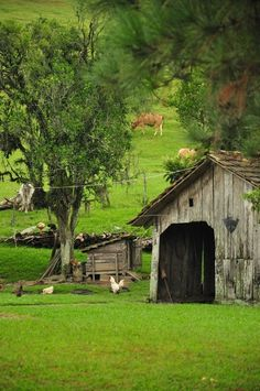 Ah...to be in the country; no worries; plenty of sunshine, fresh air, and farm animals to enjoy!  My dream was to live in the country on a farm, but that never happened.  My heart still yearns for it!  ~Kathy <3