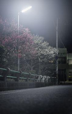 """hello again, spring"" (photography by Yukihiro Yoshida) http://digianalogue.com/photoblog/archives/2014/03/hello_again_spring.php"