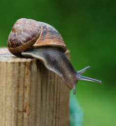 How fast can a snail move ? Roman Snail, Snails In Garden, More Pictures, Scary, Wildlife, Creatures, Sculpture, Nature, Wilderness
