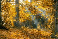 Fot TimHill on Pixabay Autumn, Leaves, Light Rays, Fall