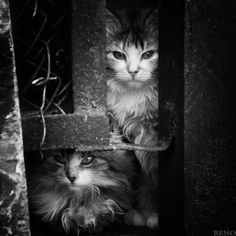 Cats (photograph); photographer unknown, vintage?  I just like it!!