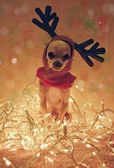 Christmas ruined.