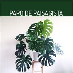 New Plants Monstera Art Ideas Best Indoor Plants, Cool Plants, Green Plants, Living Room Plants, Bedroom Plants, House Plants, Living Rooms, Apartment Plants, Green Apartment