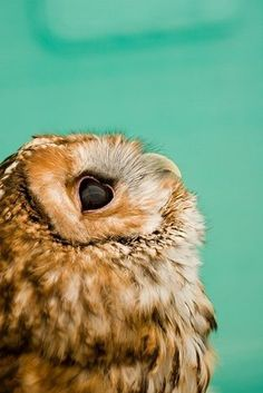 It's funny to me how goofy the profile of an owl is.......but still oh so lovely :)