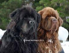 Henry & Enzo