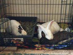 Bunnies that snooze together stay together - December 16, 2016