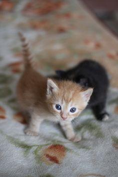 #kitten nemmeno a farlo apposta sembrano i miei pirpolini quando erano minuscoli agglomerati di pelo ispido!