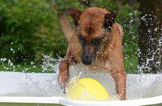 #Pool für #Hunde auf: http://www.kaltwetter.com/kuehltipps-fuer-hunde/