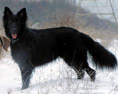 I really love German Shepherds lol