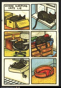 sleeping cats--I would have added two more pics to this collection: your lap and up against your body in bed with you about to fall off!