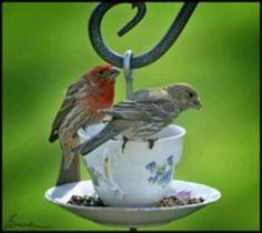 Te for 2...birds