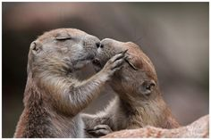 Most romantic critter kiss ever!