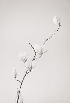 Trendy Ideas for simple aesthetic wallpaper plants Simple Aesthetic, Aesthetic Colors, Flower Aesthetic, White Aesthetic, Trendy Wallpaper, White Wallpaper, Wallpaper Iphone Cute, Plant Wallpaper, Flower Wallpaper