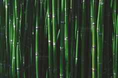 Bamboo by TheNatureShop on Creative Market