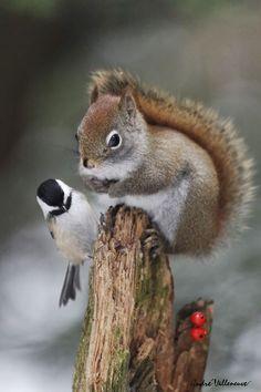 Christmas Squirrel & Chickadee