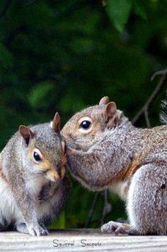The original Secret Squirrels