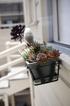 succulents in window box