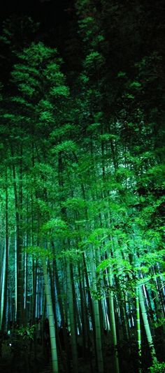Amazing Nature & Places Pictures) - Bamboo forest in Kyoto, Japan Beautiful World, Beautiful Places, Culture Art, 10 Picture, Tree Forest, Night Forest, Amazing Nature, Belle Photo, Wonders Of The World