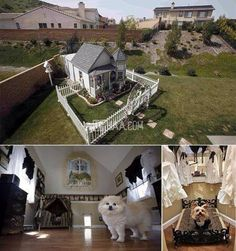 Dog house? More like dog mansion!