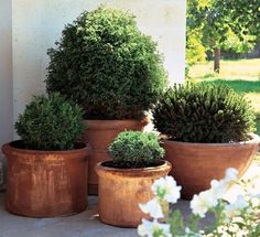 7 Container Gardening Ideas Beyond Summer Flowers Shrubs That Grow Well in Containers Evergreen Container, Container Plants, Container Gardening, Succulent Containers, Vegetable Gardening, Evergreen Potted Plants, Outdoor Potted Plants, Pot Plants, Container Flowers