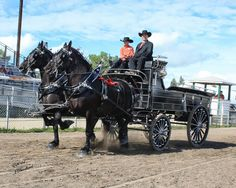 Eaglesfield Percherons Youth Team entry at the Central Alberta Draft Horse Classic 2014. Photo by J Ann Brodland