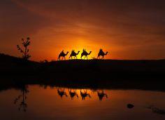 """""""Safari"""" by Ali Al-Zaidi, via 500px."""