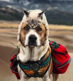 Inseparable Dog And Cat Duo Go On Adventures Together And Their Photos Are Utterly Breathtaking
