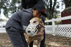 a greyhound finally finds a family.....rescue