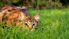 Killing machines: The staggering death toll from cats in the U.S. | MNN - Mother Nature Network