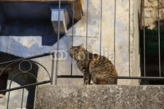 cat behind the balustrade