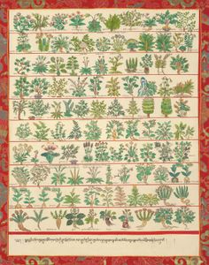de267e298a7e1 Medicinal Herbs Qinghai Province