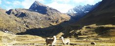 Best Ancascocha trek to Machu Picchu via Salkantay