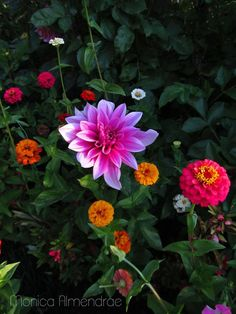 flowers friends