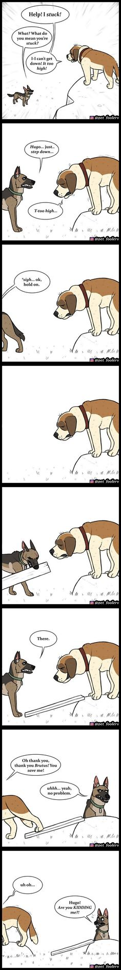 Pixie & Brutus 43 - Types of Comics Funny Animal Comics, Animal Jokes, Funny Animal Memes, Cute Funny Animals, Funny Relatable Memes, Funny Animal Pictures, Funny Comics, Cat Comics, Hilarious Memes