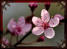 #inspiração sakura flower