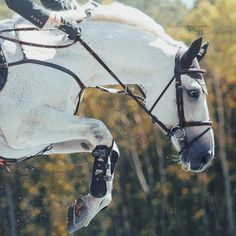 Bareback and barefoot: details barebackandbarefoot: details - Art Of Equitation Pretty Horses, Horse Love, Horse Girl, Beautiful Horses, Horse Photos, Horse Pictures, English Riding, Show Jumping, Equine Photography