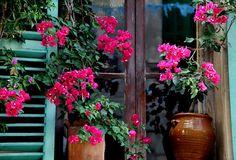 flowers-in-the-window-catalina-lira