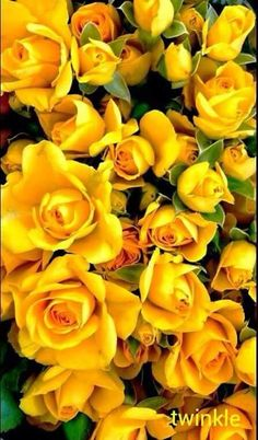 ★ Lively Yellow ★ Good morning my all face book friends.............  https://www.facebook.com/profile.php?id=100005659516807