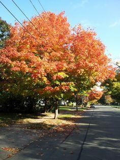 Autumn in Elm City.