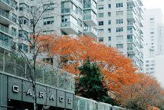 Google Image Result for http://www.smallformat.org/Autumn-In-New-York-%25237.jpg
