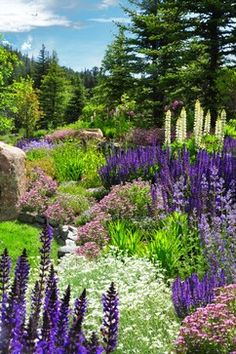 These are all good choices for places with snow in this picture are Maynight Salvia, Lupine, Snow in Summer, Soapwort and Siberian Iris