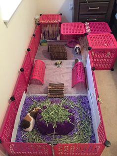 Diy Bunny Cage, Hamster Diy Cage, Diy Guinea Pig Cage, Guinea Pig House, Bunny Cages, Pet Guinea Pigs, Guinea Pig Care, Pet Cage, Rabbit Cages