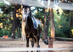Rancheros close encounters with animals © Sonia Farasopoulou Close Encounters, Ranch, Greece, Horses, Animals, Guest Ranch, Greece Country, Animales, Animaux