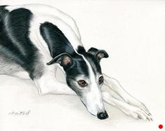 """Greyhound in Repose by Heather A. Mitchell Colored Pencil ~ 11"""" x 14"""""""